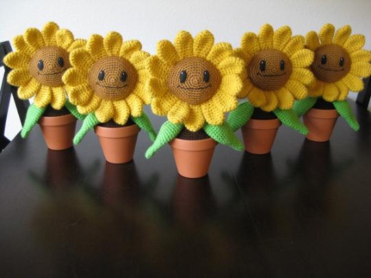 SunflowerPic4